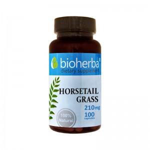 HORSETAIL-GRASS