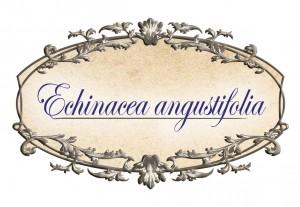 ehinacea-strak