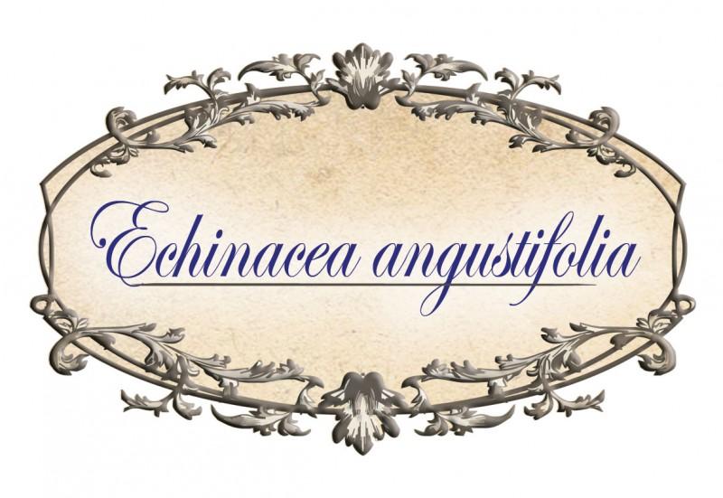 Ехинацея стрък Avenir, 50гр. - Avenir Pharma