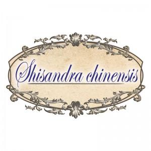 shisandra